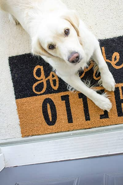 Dog lying on doormat