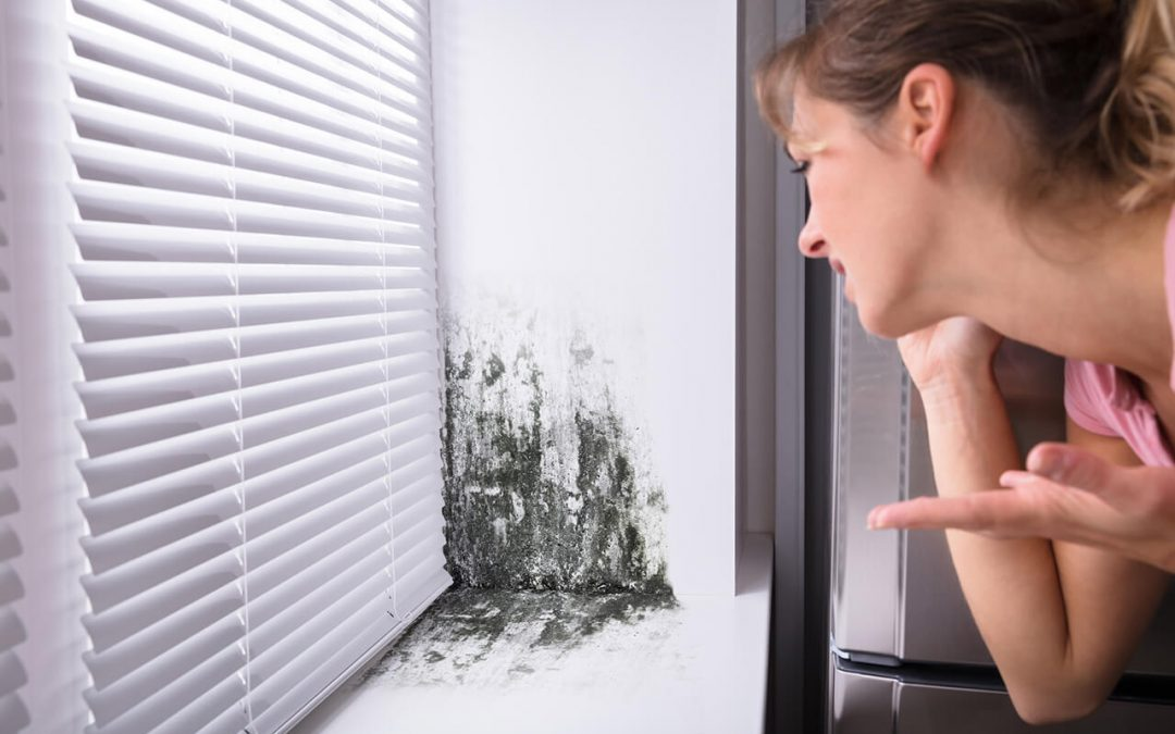 3 Things You Need to Know About Mold In Your Home